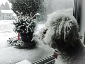 A friend's pup watching the snow fall on Sunday